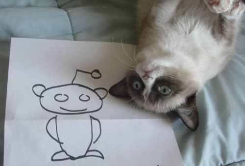 reddit is for startups, not only cats